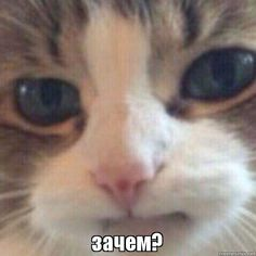 angry cat If the cat mad we all mad - cat Cute Funny Animals, Funny Cats, Funny Looking Cats, Animal Pictures, Funny Pictures, Cat Crying, Cute Cat Memes, Sad Cat, Angry Cat