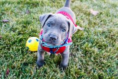 Meet the newest member of my family, and he's a killer. (a lady killer) - Imgur