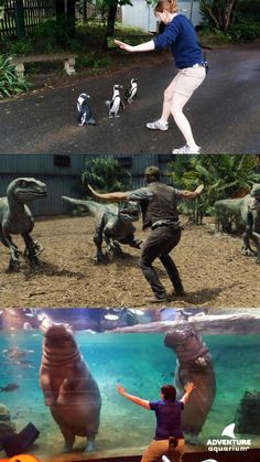 Our biologists have got the #‎prattkeeping technique down! #ZoorassicWorld #StandDown #JurassicZoo
