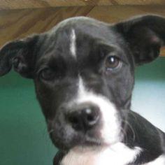 "Dog Adoption San Diego - Adopt A Dog   Cat Adoption San Diego - Adopt A Cat   Helen Woodward Animal Center ""Happy"""