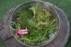 Soak thirsty plants between one and five hours. Keep blooms above water level.