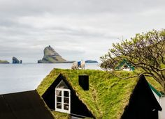 Google Sheep View: Creature-Mounted Cameras Map Rugged Faroe... #weburbanist #arts #street_art