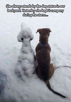 30 Funny Animal Pictures #17 #dogsfunnybaby