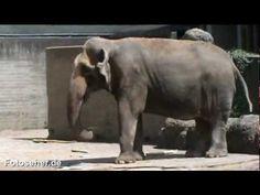 Mesék állatokról: Állatkerti mesék | Kutyavilág