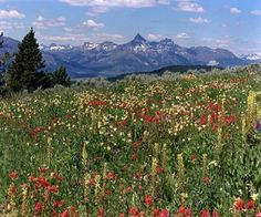 Welcome to the Beartooth Highway in Montana & Wyoming  Pilot Peak