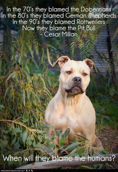 :( its true though!! Humans make the dogs mean. No dog is naturally mean unless taught to be.