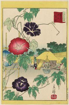 Utagawa Hiroshige II: Morning Glories at Iriya in the Eastern ... Asagao/Morning Glory is a summer motif for chanoyu.