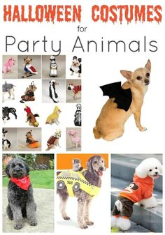 Halloween Costumes for Dogs! These are all so adorable! Animal Halloween Costumes, Pet Costumes, Dog Halloween, Halloween Ideas, Costume Ideas, Halloween Stuff, Halloween Crafts, Animal Party, Party Animals