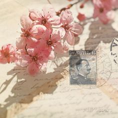 Vintage Letters and Cherry Blossoms Art Print