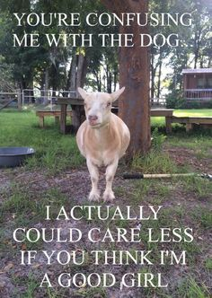 Quotes About Goats Gorgeous 14 Goat Quotes For Every Occasion  Pinterest  Goats Community And .