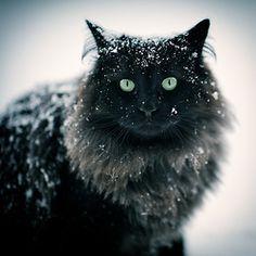 A little bit snowy?