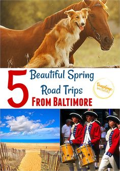 5 Beautiful Spring Road Trips from Baltimore. These are all super fun ideas for family travel! Family Road Trips, Family Travel, Wild Animal Park, Great Wolf Lodge, Weekend Trips, Weekend Getaways, Canoe Trip, Family Day, Horseback Riding
