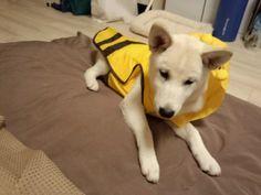 his new raincoat!