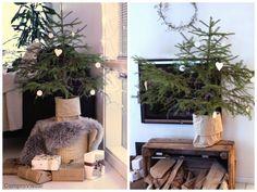 christmas tree Home, Christmas Tree, Christmas