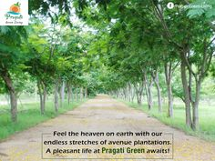 Feel the heaven on earth with our endless stretches of avenue plantations. A pleasant life at Pragati Green awaits!