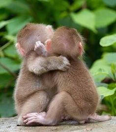 Two Adorable Little Monkeys Hugging each other - Sibling Love! Cute Baby Animals, Animals And Pets, Funny Animals, Strange Animals, Primates, Beautiful Creatures, Animals Beautiful, Cute Monkey, Baby Monkey Pet