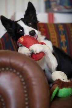 Hugging her toy. Love #puppy cuteness!