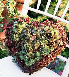 Plant a Living Wreath Ӂ Tough, drought-tolerant succulents are a perfect way dress up gates, fences, walls, and doors. Create a living wreath like the one shown. Garden Crafts, Garden Projects, Garden Art, Cacti And Succulents, Planting Succulents, Planting Flowers, Sempervivum, Succulent Wreath, Deco Floral
