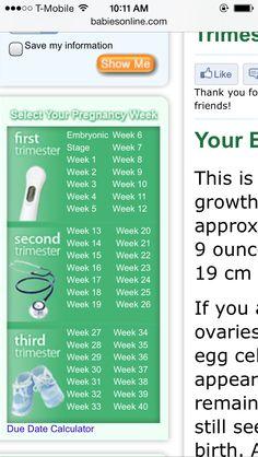 Pregnancy stages Pregnancy Stages, Baby, Stages Of Pregnancy, Newborns, Baby Baby, Infants, Child, Toddlers