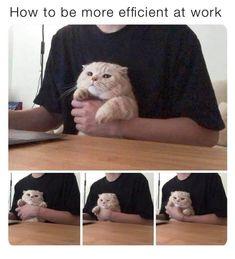Work Humor, Cats, Animals, Gatos, Animales, Animaux, Work Memes, Animal, Cat
