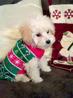 pets in ugly christmas sweaters - Ugly Christmas Dog Sweater