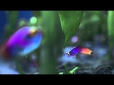 Cadbury Fish Advert - Spots v Stripes (official HD version) Funny Commercials, Funny Ads, You Funny, Funny Memes, Hilarious, Funny Animal Videos, Funny Animals, Funny Videos, Successful Marketing Campaigns