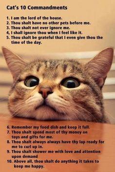 Ten cat commandments
