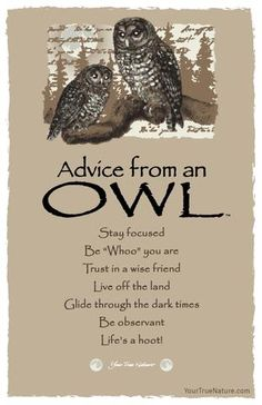 Advice from an Owl- Postcard- Your True Nature Advice Quotes, Wisdom Quotes, Life Quotes, Dark Quotes, Advice Cards, Positive Words, Positive Quotes, Owl Quotes, Animal Spirit Guides