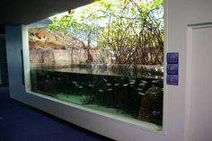 mangrove tank