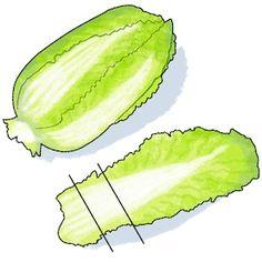 Sci-Fi Science: Attack of the Cabbage Clones - Scientific American