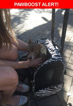 Is this your lost pet? Found in San Antonio, TX 78205. Please spread the word so we can find the owner!    Nearest Address: San Antonio convention center
