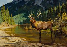 In His Prime | Carl Rungius1869 - 1959 | Artwork | National Museum of Wildlife Art
