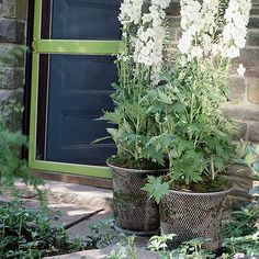Wire Wastebasket-Lightly line a wire wastebasket with peat moss, then fill the remaining area with potting soil. Top it off with your desired plants. Here, white delphiniums lend subtle elegance to an entry area