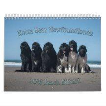Notta Bear Newfoundlands Calendar Beach Edition