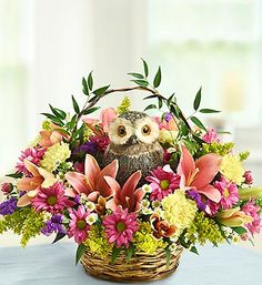 Whooo Loves You?™ (1-800-Flowers in Houston, TX)
