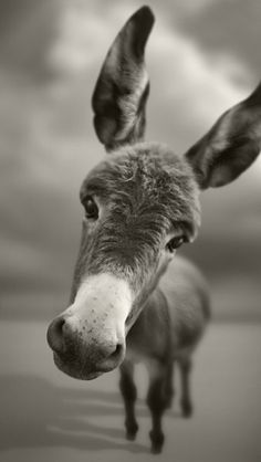 A lovely, sad donkey.