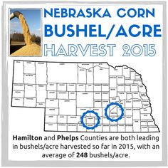 Did you know that Hamilton and Phelps Counties are the two leading Nebraska counties in bushels/acre harvested in 2015 with 248 bushels/acre?