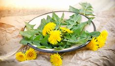 Dandelion Herb: History, Health Benefits, Nutrition Facts, Side Effects, Fun Facts Dandelion Coffee, Dandelion Leaves, Dandelions, Cough Remedies, Home Remedies, Tea For Flu, Dandelion Benefits, Different Types Of Tea, Flu Prevention