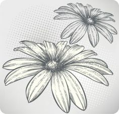 Blooming flowers, hand-drawing. Vector illustration. Stock Photo - 13400644