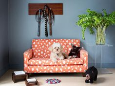 Furniture, Original Pet Friendly Spaces Dog Couch With Blue Color Wall With Calm Color Floor With Carpet And With Orange With White Dog With Some Black Dools And Green Plants: Ten Images Of The Dog Proof Couch With Cover That Can You Choose Up To You Dog Couch, Dog Spaces, Kids Sofa, Dog Rooms, Diy Bed, Pet Beds, Pet Accessories, Decoration, Mudroom
