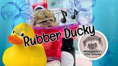 Bath time fun with rubber ducky Skin Oil, Oils For Skin, Bath Time, Hedgehog, Connection, Singing, Jokes, Lol, Humor