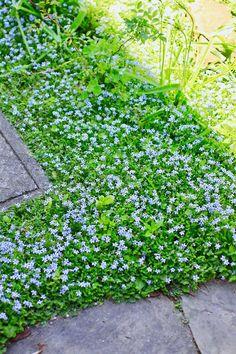 You May Enjoy organic gardening tips Using These Tips