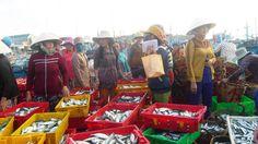 Đầu năm, ngư dân Ninh Thuận trúng đậm mùa cá nục - https://daikynguyenvn.com/viet-nam/dau-nam-ngu-dan-ninh-thuan-trung-dam-mua-ca-nuc.html