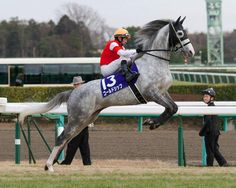 Gold Ship wins Arima Kinen Gold Ship ridden by Hiroyuki Uchida, gallops to victory in the 57th Arima Kinen, the final Grade 1 race of the year in Japanese horse racing, at Nakayama Racecourse in Chiba Prefecture on Dec. 23, 2012. Gold Ship, a 3-year-old, crossed the line in 2 minutes, 31.9 seconds over the 2,500 meters, capturing his third Grade 1 title.