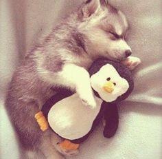 Soooo cute! ❤️