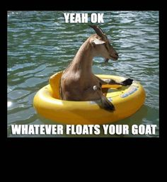 Funny Photos, Goat Floats