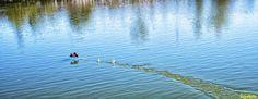 Waves, Bird, Ps, Landscapes, Animals, Outdoor, Running Away, Paisajes, Outdoors