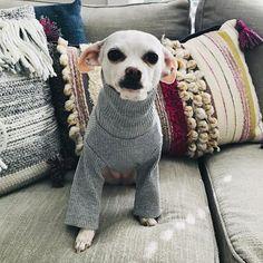 2 Chihuahua Dog Dollar Bills Collectible -Novelty ITEM FAKE M MONEY