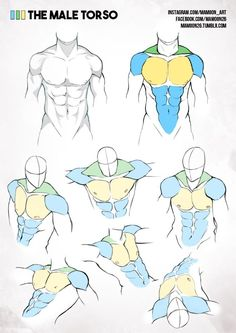 simplified anatomy 01 - male torso by mamoonart.deviantart.com on @DeviantArt