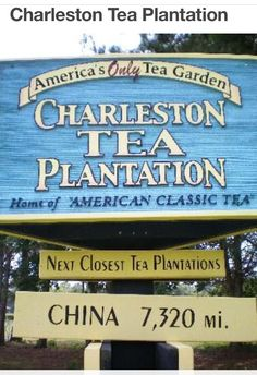 The Charleston Tea Plantation is the home of American Classic Tea, tea grown in America. It is located on picturesque Wadmalaw Island in the heart of South Carolina's Lowcountry. What A Wonderful World, Charleston South Carolina, Charleston Sc, North Carolina, Places To Travel, Places To Go, Travel Stuff, Isle Of Palms, Folly Beach